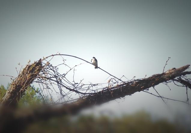 birdonbranch2